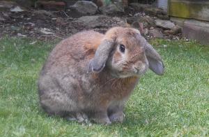 rabbit-422361_1280